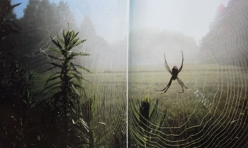 蜘蛛、広角ベスト.jpg