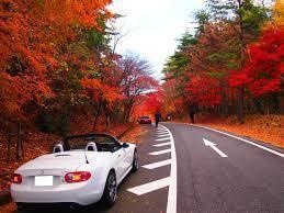並木と車.jpg