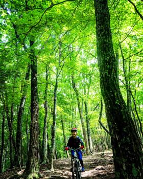 森自転車.jpg