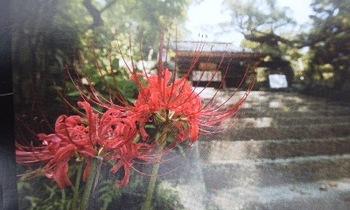 花と階段.jpg