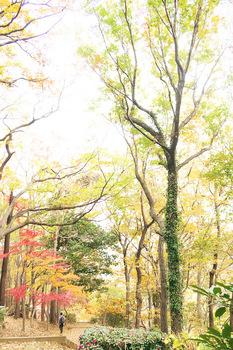 nobuzohaikii.jpg